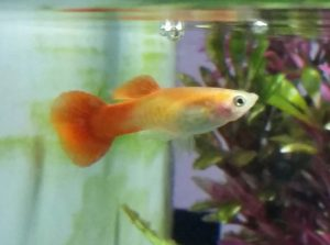 Fish #6