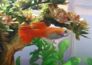 New fish #7